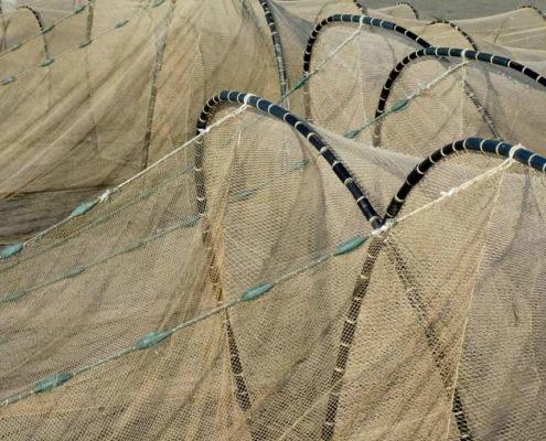 Afvissing, verwijderen van vis | Kooistra Visserij