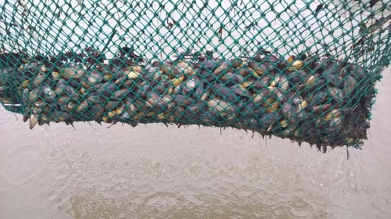 Mossels afvissen | Kooistra Visserij