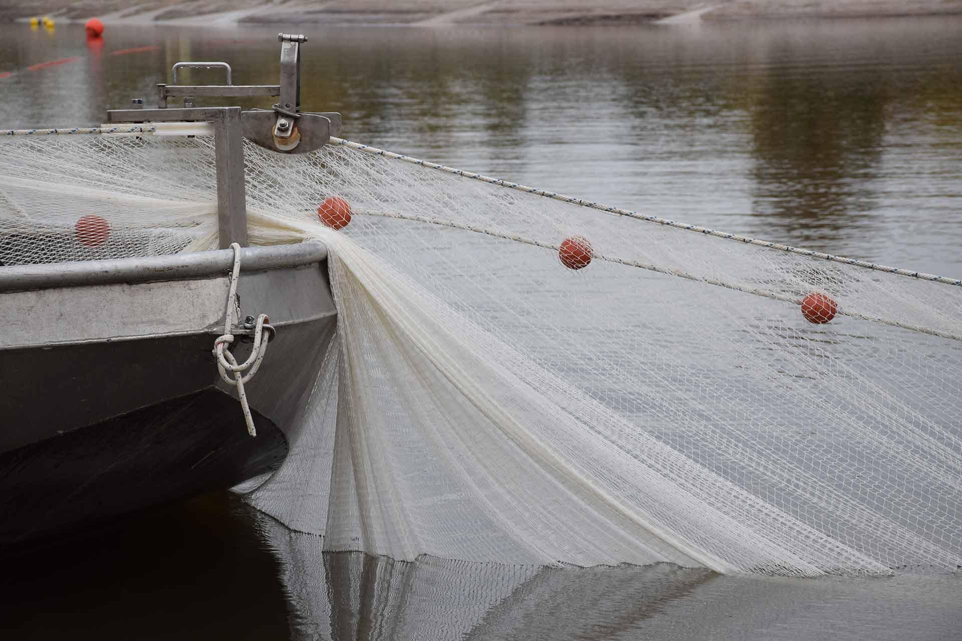 Afvissen en vis verplaatsen | Kooistra Visserij: afvissen, onderzoek en beheer