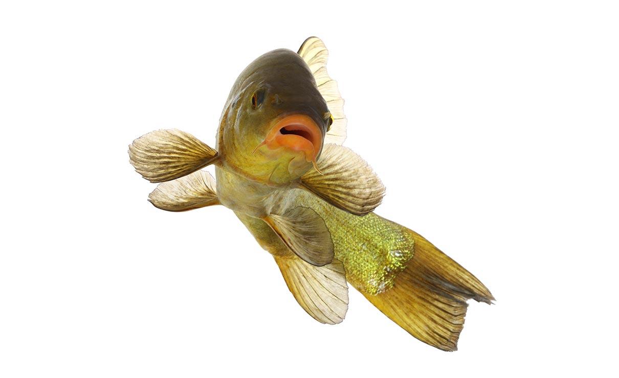 Beheer voor een gezonde visstand en watermilieu | Kooistra Visserij