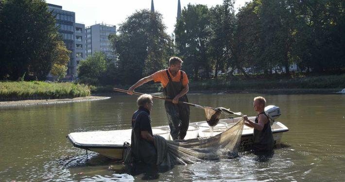 Afvissen Stadspark Antwerpen | Kooistra Visserij